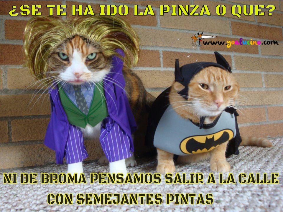 Gatos Desafiantes