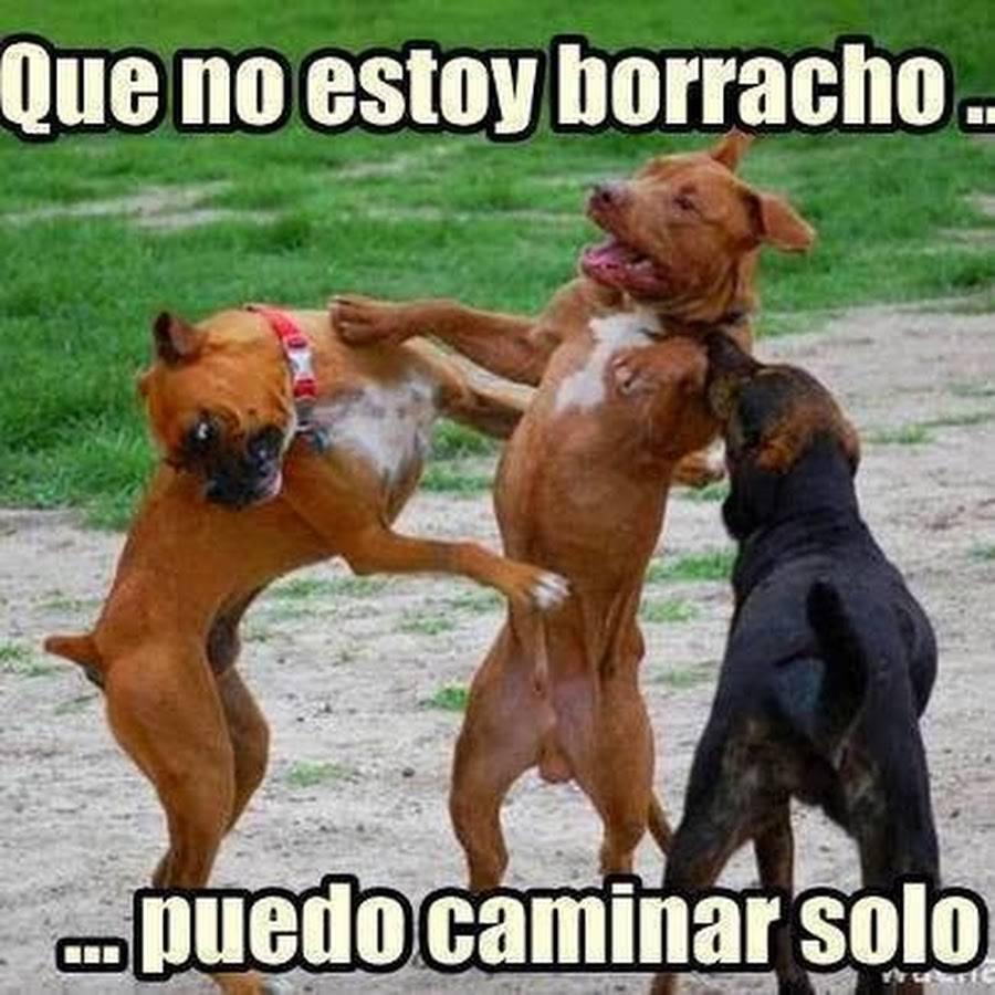 No Estoy Borracho