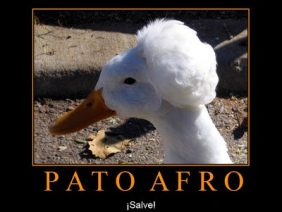 Pato Afro