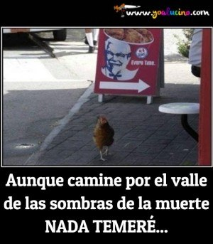 Pollo Intrépido