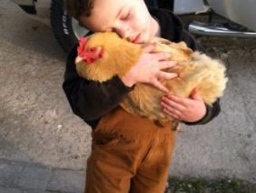 El Pollo Que Más Te Quiere