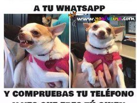 Responder al Whatsapp