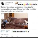 Horse Luis el Gato
