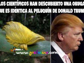 El Peluquín de Donald Trump
