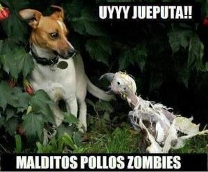 Pollos Zombies