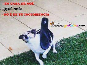 Noe Incumbencia