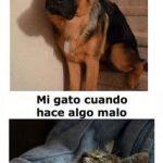 Mi Perro y Mi Gato Cuando Hacen Algo Malo