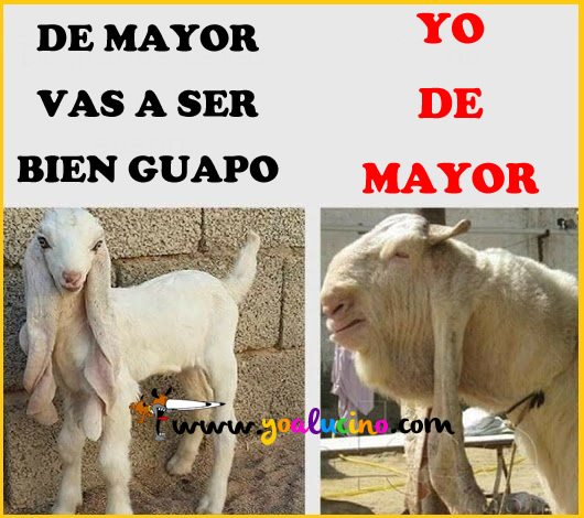 Guapo de Mayor