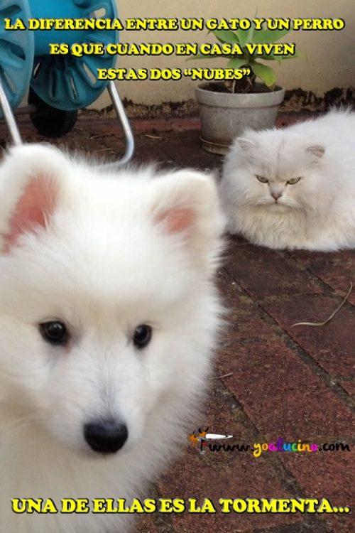 La Diferencia entre un Perro y un Gato