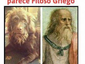 Perro Filósofo Griego