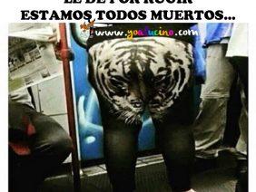 Como a Este Tigre le Dé por Rugir