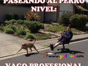 Paseando al Perro Nivel Vago Profesional