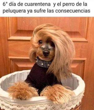 El Perro de la Peluquera