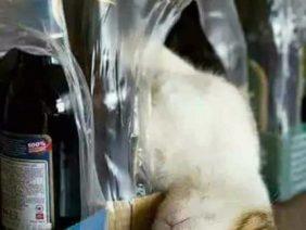 Whisky o Whiskas?